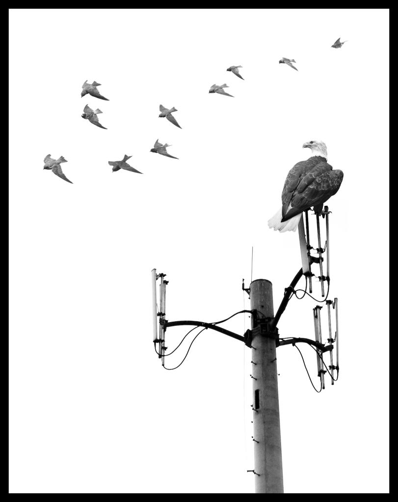 migration06
